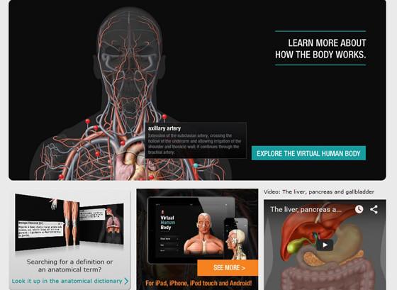 Ikonet.com - раздел Виртуальная анатомия