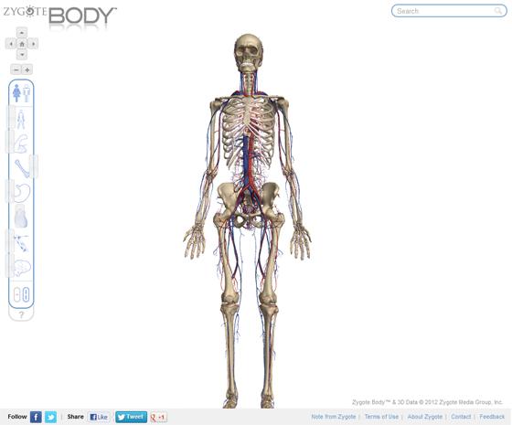 анатомический атлас тела